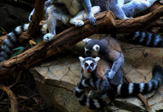 A Bronx Zoo Adventure