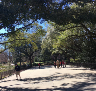 Walking around the University of South Carolina. Photo by Olivia Lein.