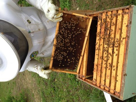 Buzzing around with an almost master beekeeper